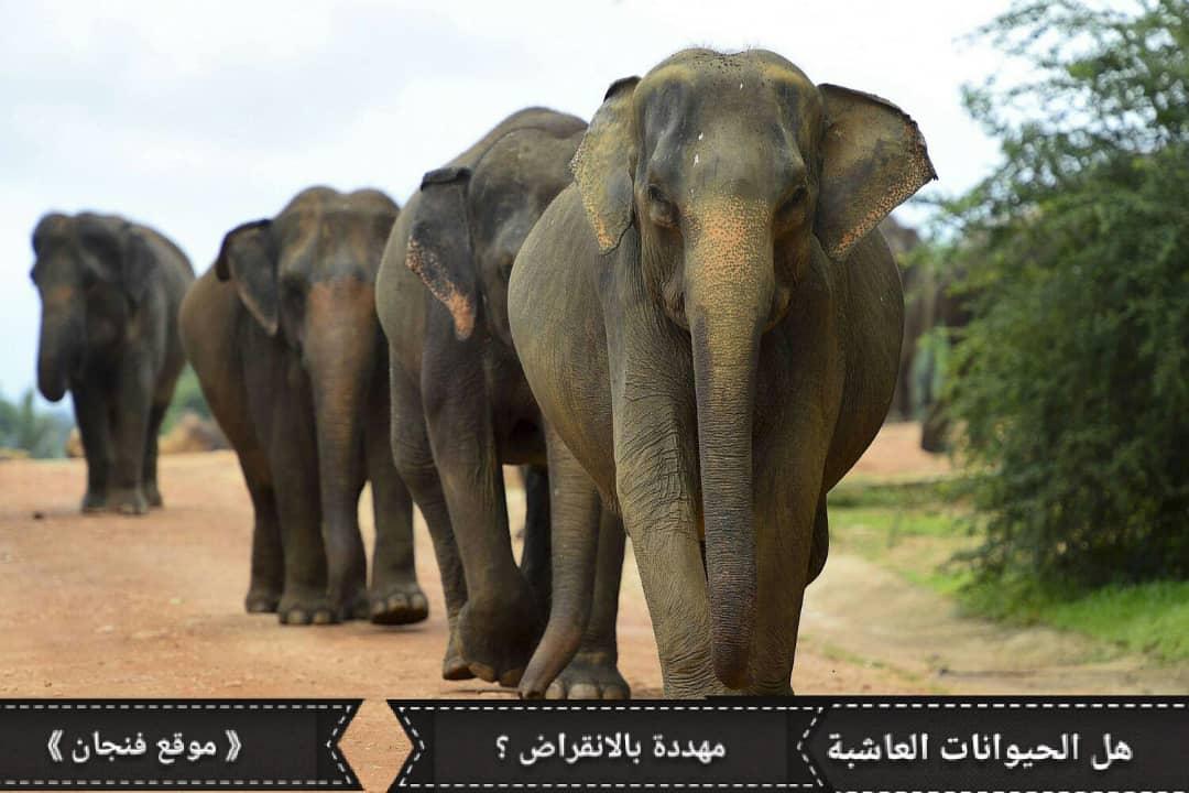 هل الحيوانات العاشبة مُهددة بالانقراض؟