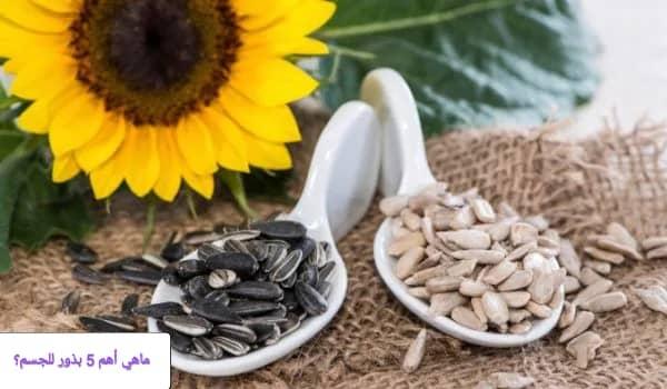 أنواع من البذور المفيدة للصحة والجسم