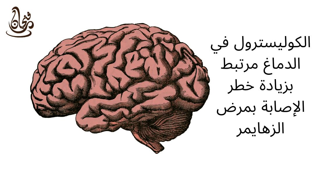 الكوليسترول في الدماغ