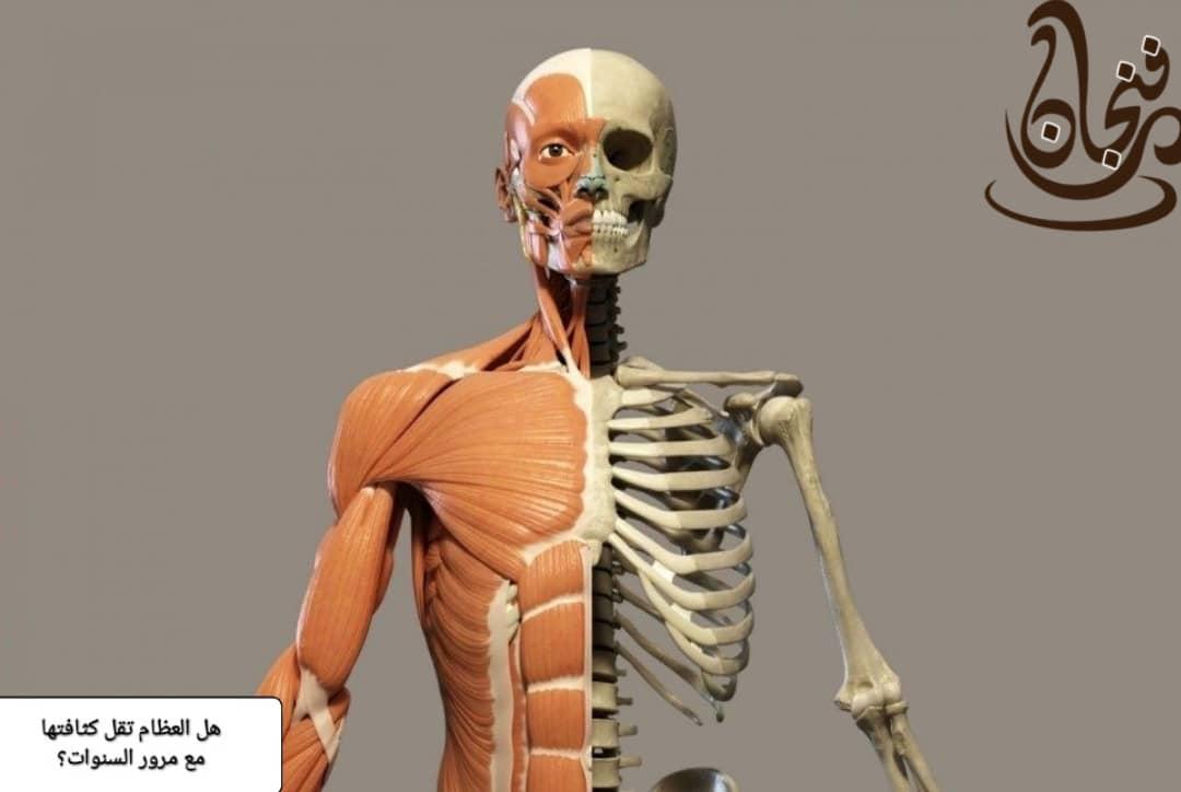 عظام الإنسان تقل كثافة