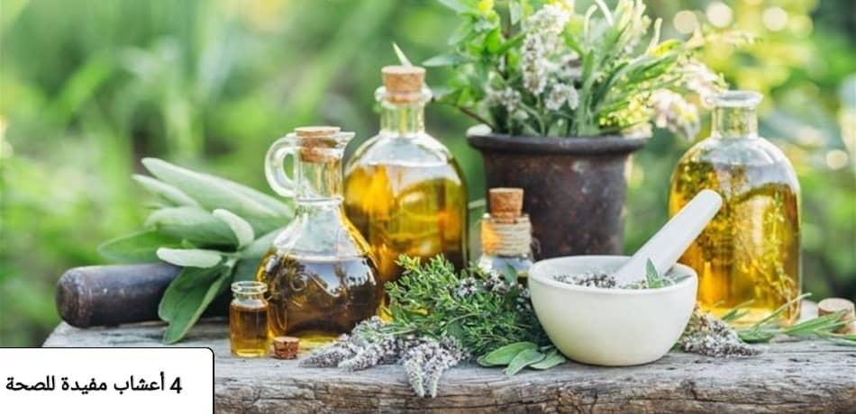 أعشاب مفيدة للصحة