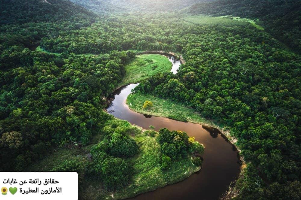 حقائق رائعة عن غابات الأمازون