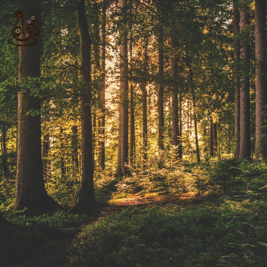 أقدم 10 غابات مطرية في العالم